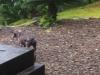 pluma-our-guest-dog